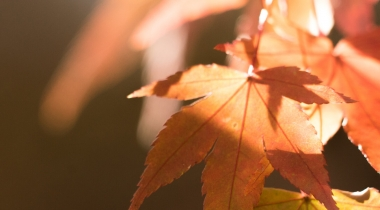 Looking after your eyes this autumn